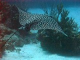 Grand Cayman 2012