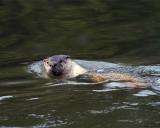 River Otter.jpg