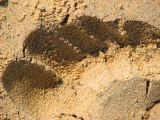 Sandy footprint