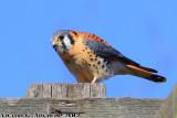 - Birding Talbert Nature Center
