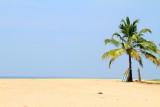 Boat on Coconut tree, Marari beach, Mararikulam, Kerala