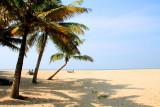 Windy side, coconut trees, Marari beach, Mararikulam, Kerala