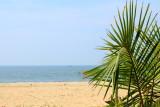 Coconut leaves and the Arabian Sea, Marari beach, Mararikulam, Kerala
