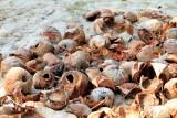 Coconut shells, Marari beach, Mararikulam, Kerala
