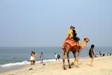 Camel ride, Alappuzha beach, Alappuzha, Kerala