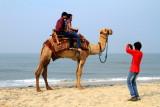 Camel ride photographer, Alappuzha beach, Alappuzha, Kerala