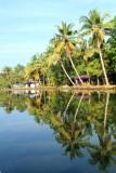 Cocount trees, backwaters, Kumarakom, Kerala