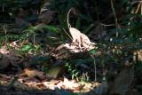 Dinosaur, Kumarakom bird sanctuary. Kerala