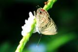 Butterfly, Kumarakom bird sanctuary. Kerala
