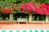 Bougainvillea, Bench, Lalbagh Botanical Gardens, Bangalore