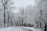 Winter 2013, Deer Grove Forest Preserve, Palatine, IL
