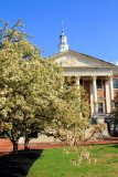 Cherry Blossoms, Maryland State House,  Annapolis, Maryland