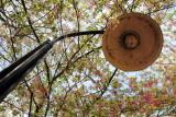 Cherry Blossoms, Tidal Basin, Lamp Post, Washington D.C.