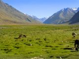 Fields on Shandur Pass, Northern Areas