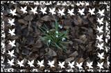 Leaves Snowdrops art border copy.jpg