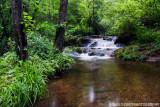 Parsons Branch stream