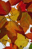 Autumn Lite Brite
