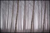 Fog near Montsonis - Spain