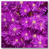 800flower10aPB164428.JPG
