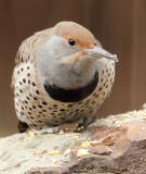 Fall 2012 Colorado Bird List