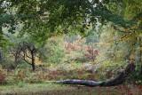 Autumn in Ashridge