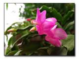 IMG_4059 A splash of pink