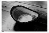 IMG_6953 Maple bowl ...
