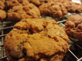 05 Chocolate chip mealworm cookies