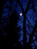 18 Winter moon 6741