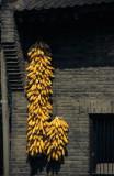 Maize Village #5