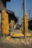 Maize Village #3