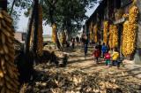 Maize Village