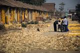 Maize Village #4