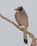 Birdtrips ( Fågelresor )