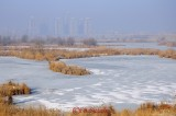 delta bucurestiului_iarna_1.jpg