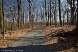 Trail in Springtime