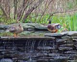 Nature Center Pond II