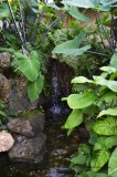 Water Feature - Northurp Tropical Room