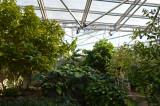 Northrup Tropical Exhibit