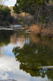 Pocket Park along Bull Creek