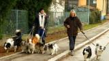 doggie walk