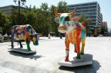 Greek Cows in Athens
