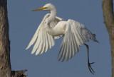 Egret Leap