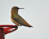1390_hummingbirds