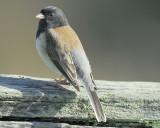 1670_sparrows