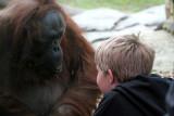 IMG_3244 Young Boy -  Orangutang.jpg