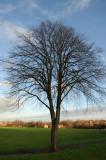 4 January: Tree!