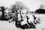 25 January: Snow Still Here!
