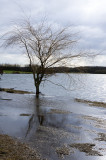 6 February: Waterlogged Tree