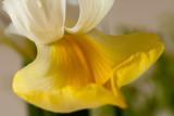 23 April: Lily